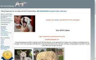 Hybrid Wolf Puppies