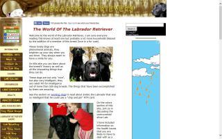 Labrador-Retriever-Info.com