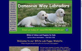 Damascus Way Labradors