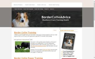 Border Collie Advice