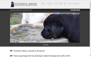 Notonlyblack Labradors